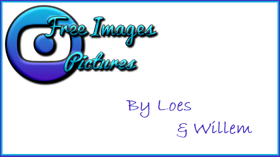 free images and pictures
