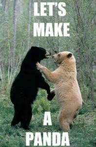 Lets_make_a_panda